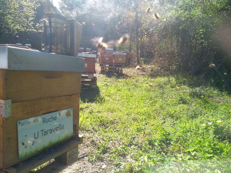 La ruche U Taravellu