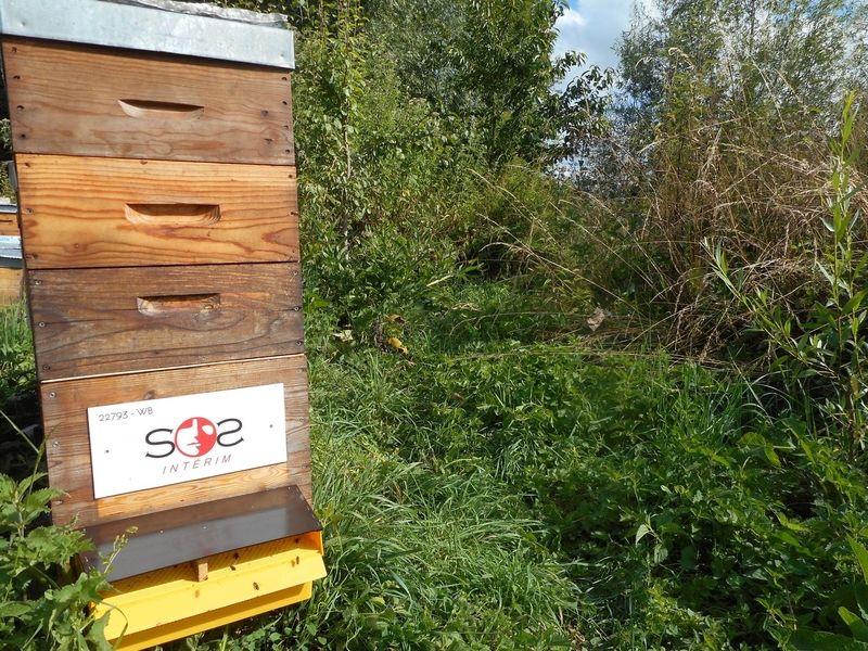 La ruche SOS Intérim