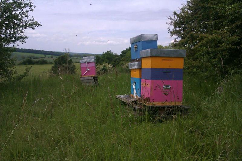 La ruche Mouron Bleu
