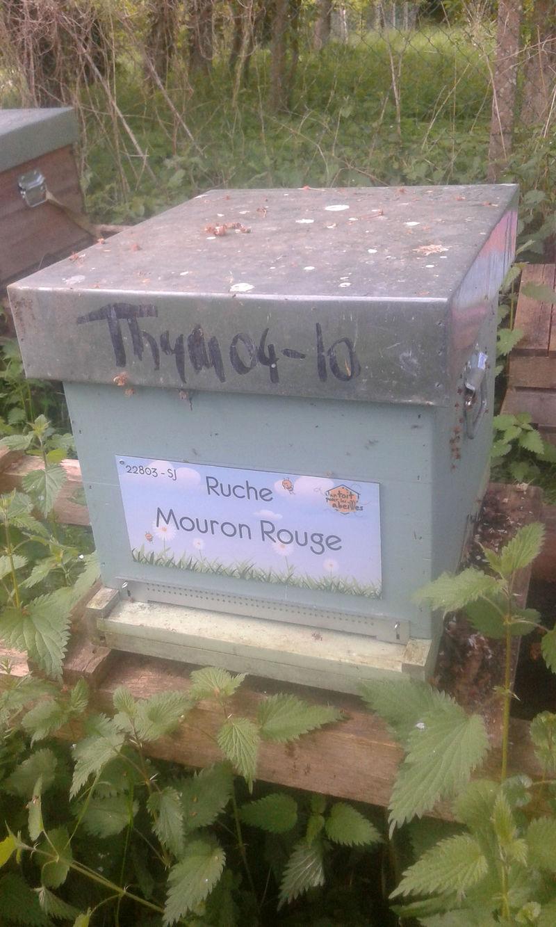 La ruche Mouron Rouge