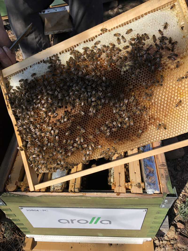 La ruche AROLLA