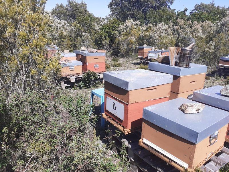 La ruche bellon import