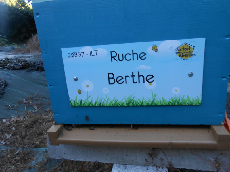 La ruche Berthe