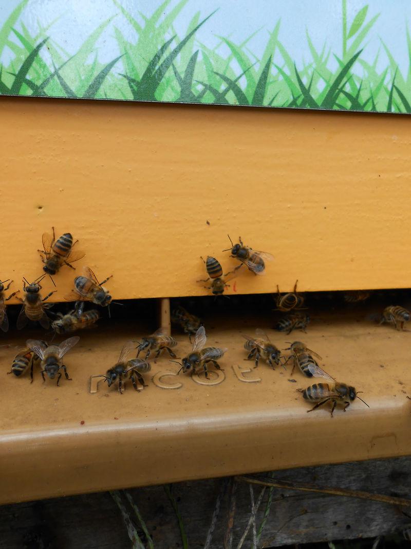 La ruche Gisèle