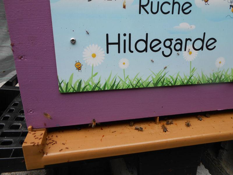 La ruche Hildegarde