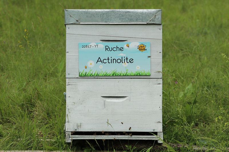 La ruche Actinolite