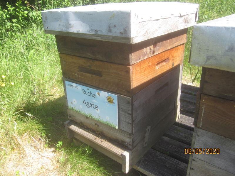 La ruche Agate