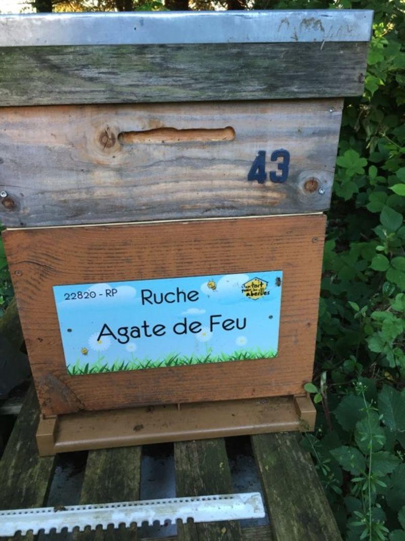 La ruche Agate de Feu