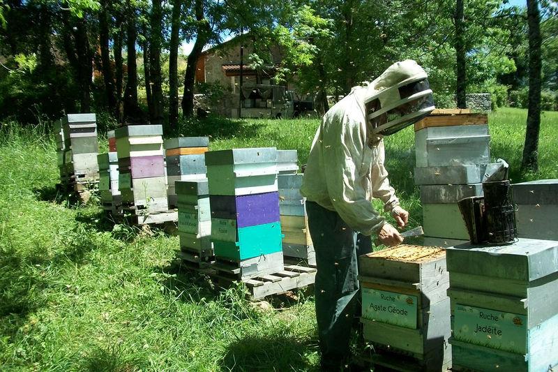 La ruche Agate Géode