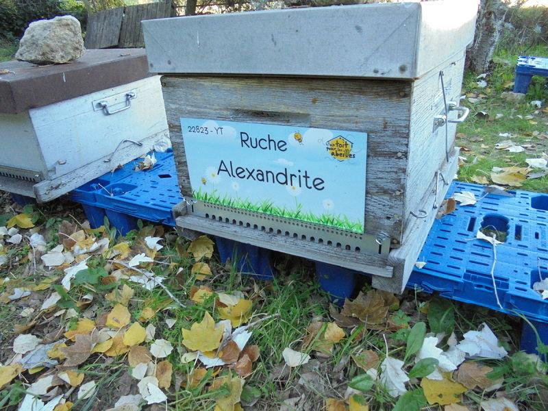 La ruche Alexandrite