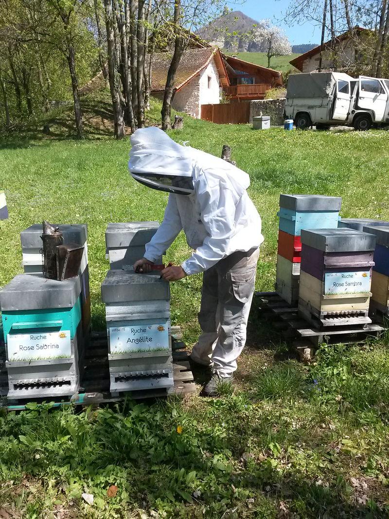 La ruche Angélite