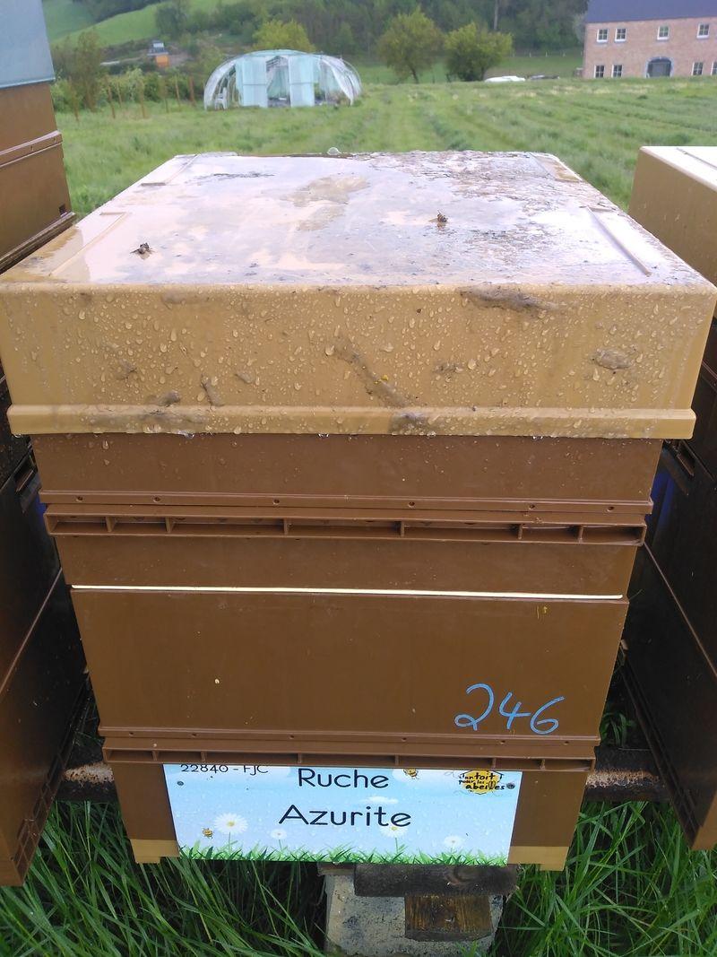 La ruche Azurite