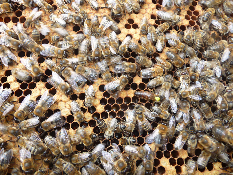 La ruche Béryl