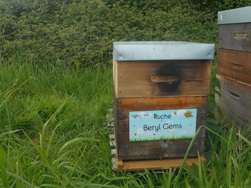 La ruche Beryl Gems