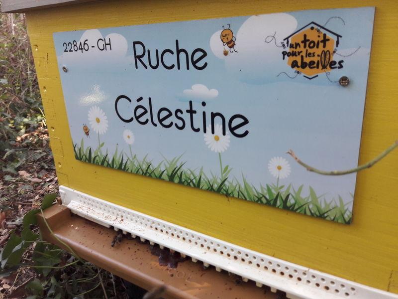 La ruche Célestine