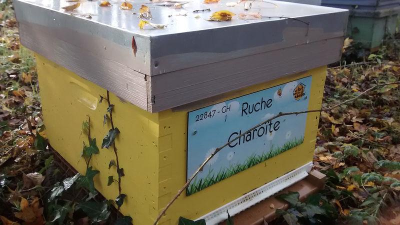 La ruche Charoïte