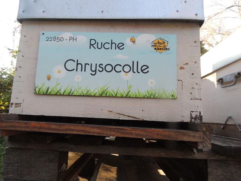 La ruche Chrysocolle