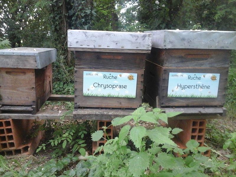 La ruche Chrysoprase