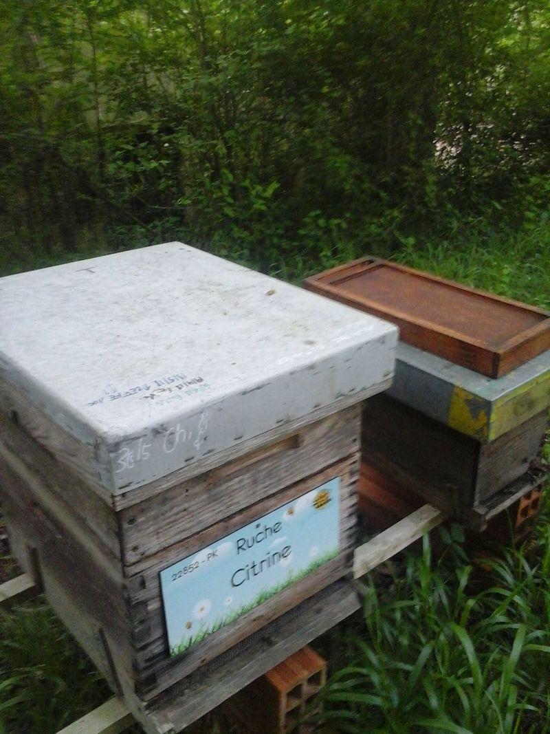 La ruche Citrine