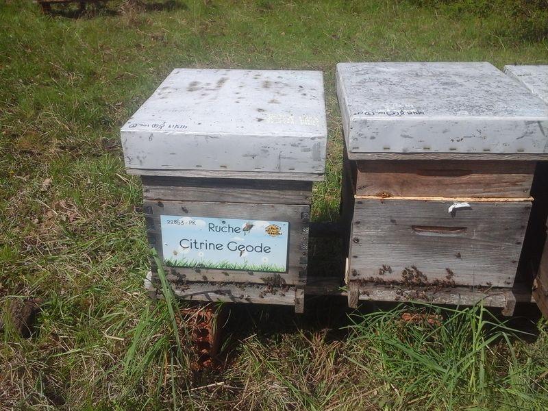La ruche Citrine Geode