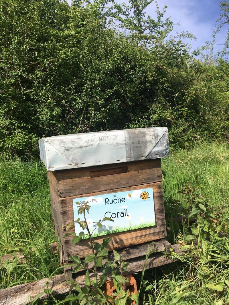 La ruche Corail
