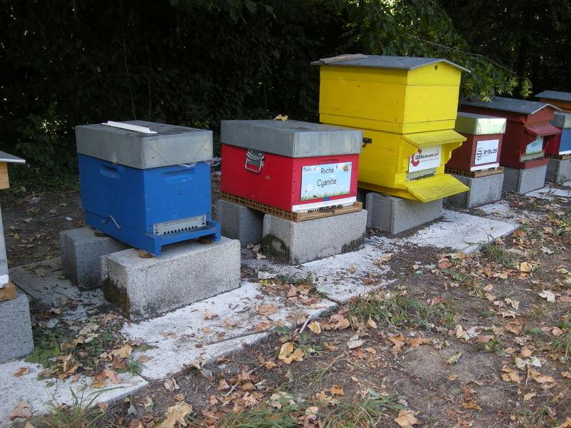 La ruche Cyanite
