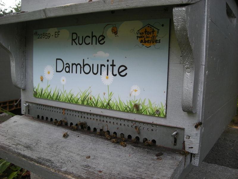 La ruche Damburite