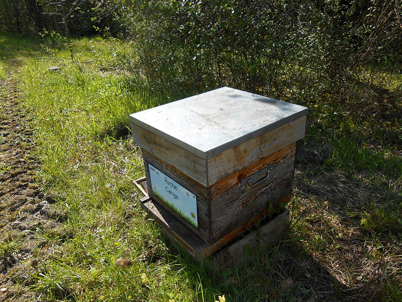 La ruche Cange