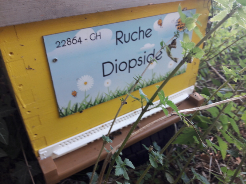La ruche Diopside