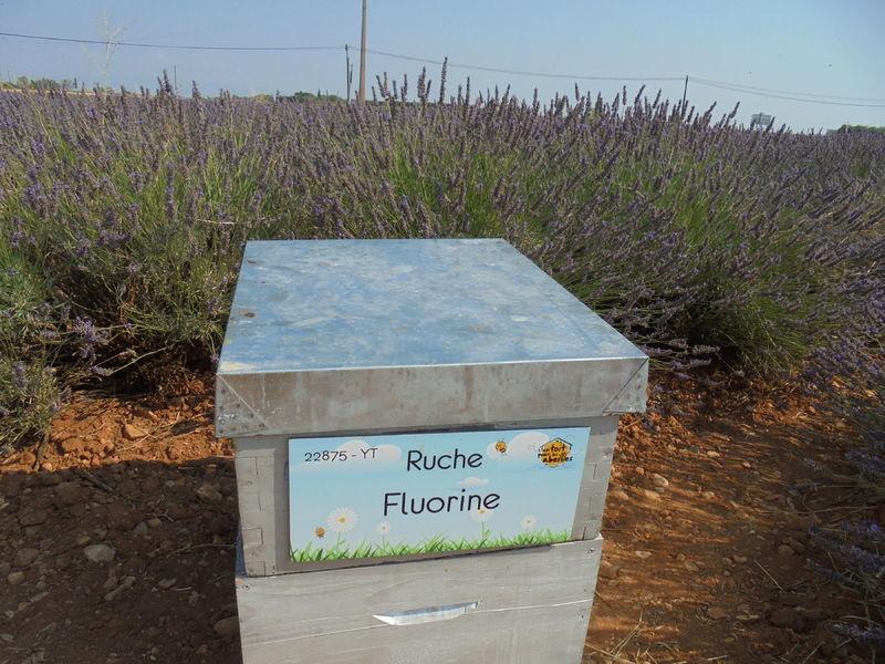 La ruche Fluorine