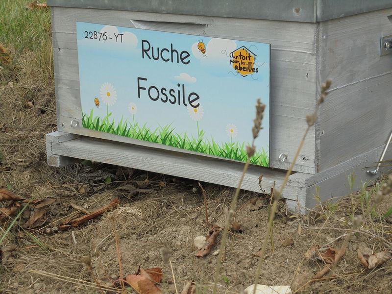 La ruche Fossile