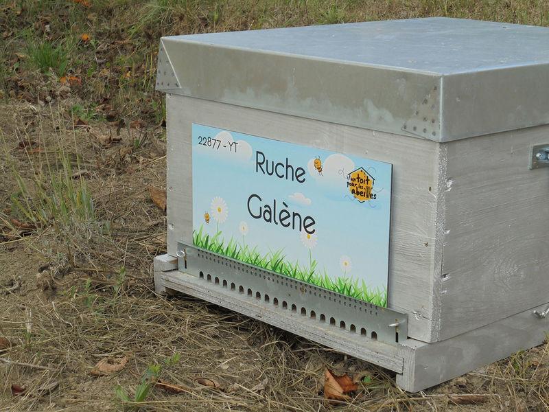 La ruche Galène