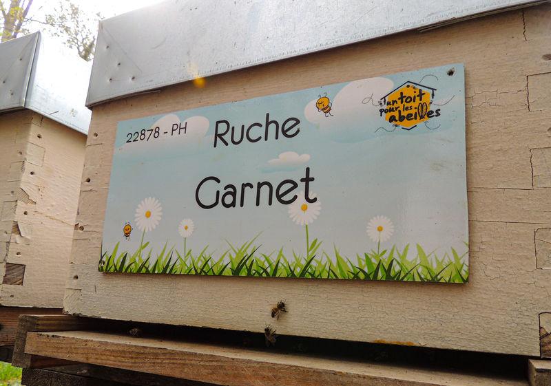 La ruche Garnet