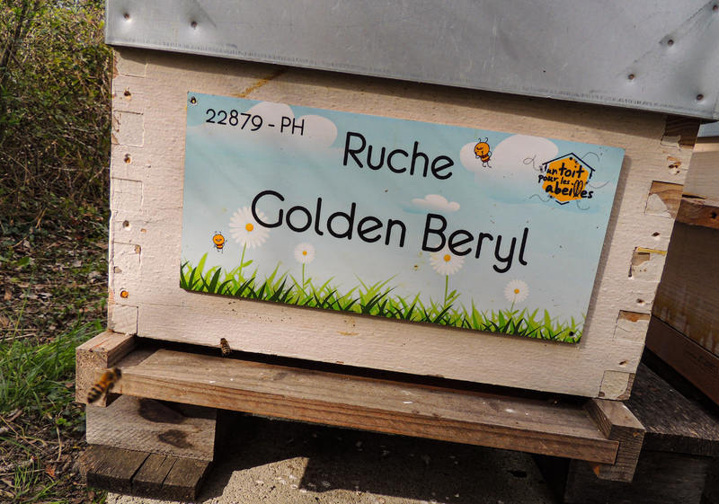La ruche Golden Beryl