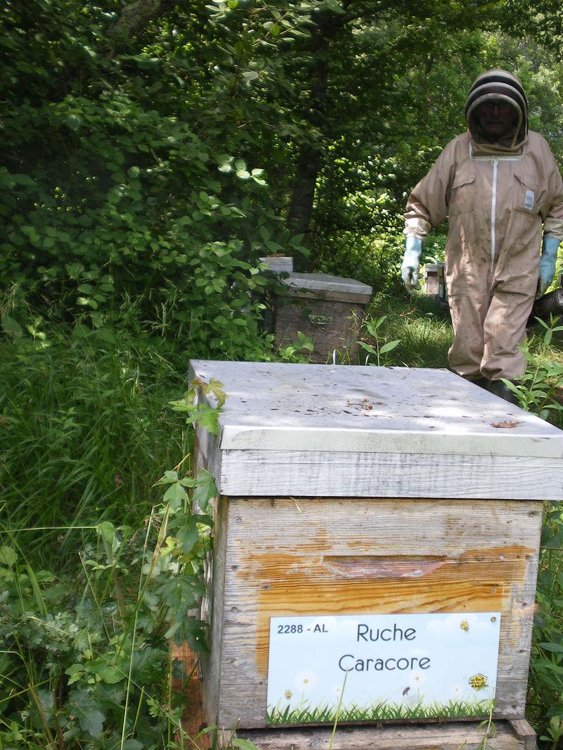 La ruche Caracore