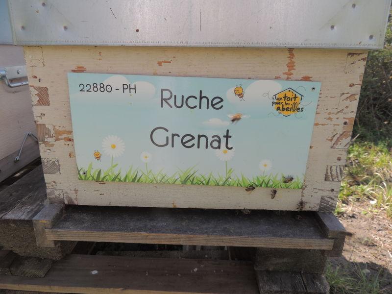 La ruche Grenat