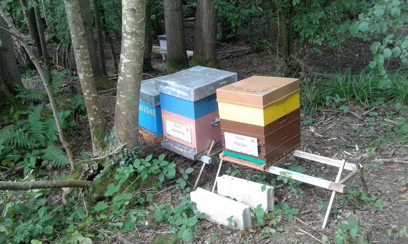La ruche Hématite