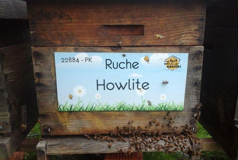 La ruche Howlite