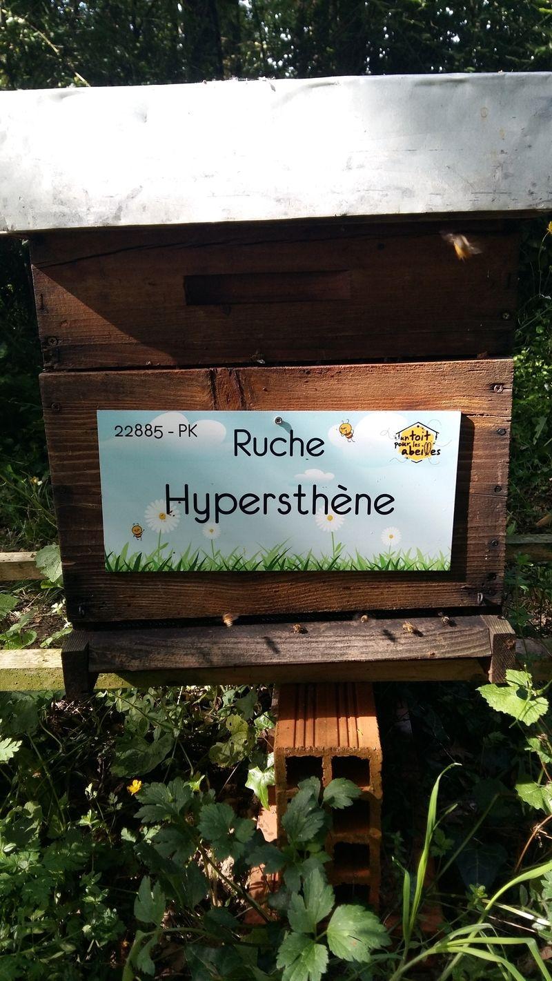 La ruche Hypersthène