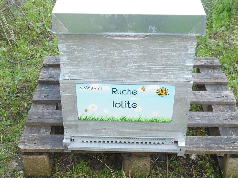 La ruche Iolite