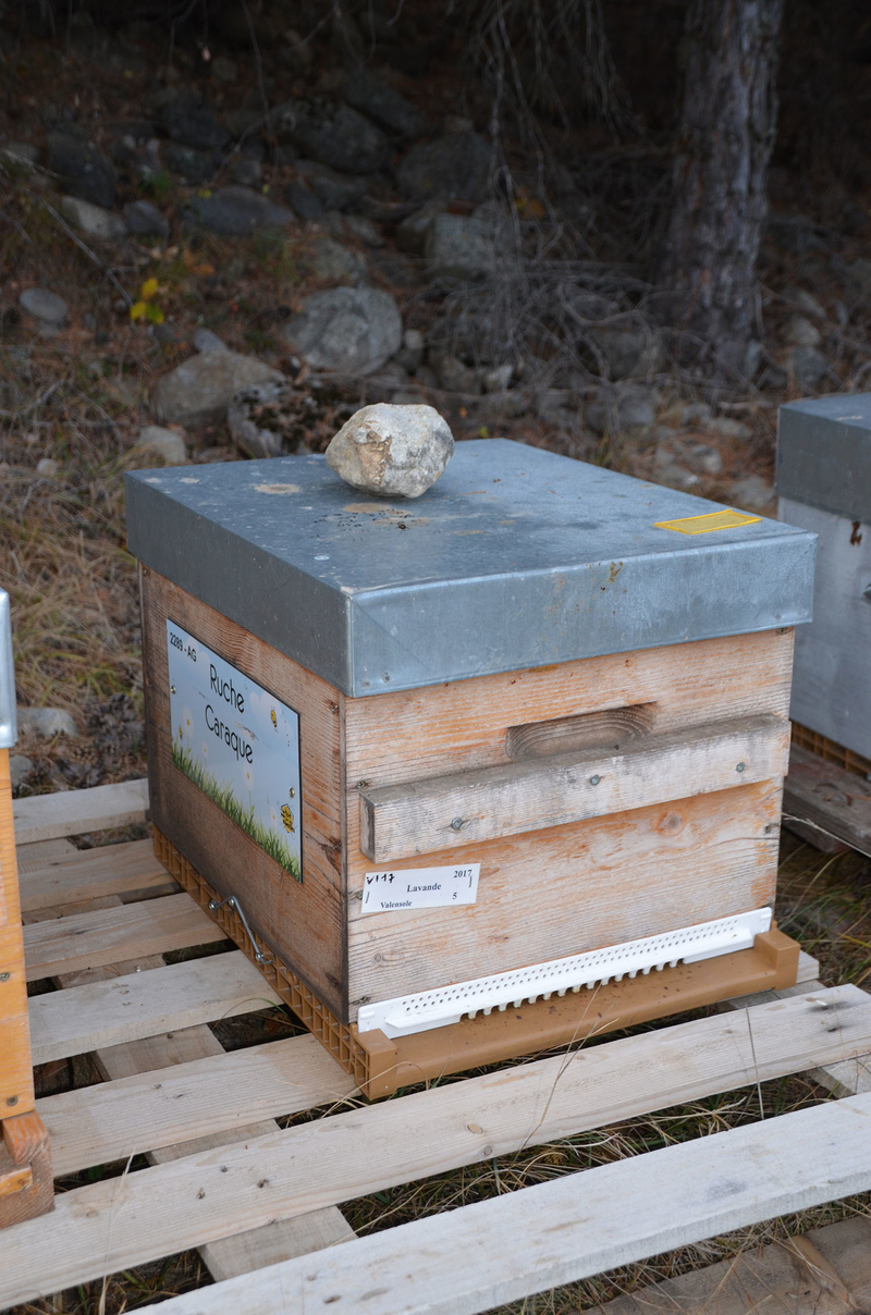 La ruche Caraque