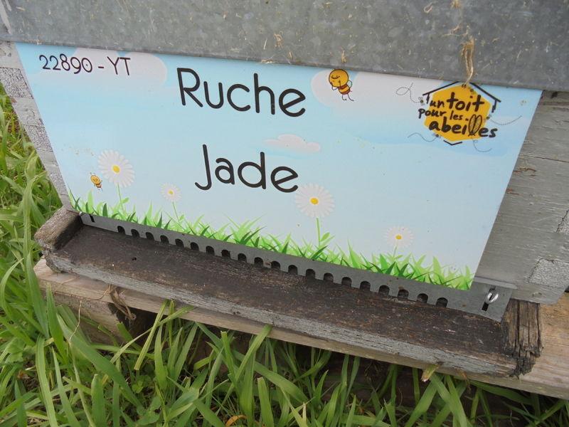 La ruche Jade