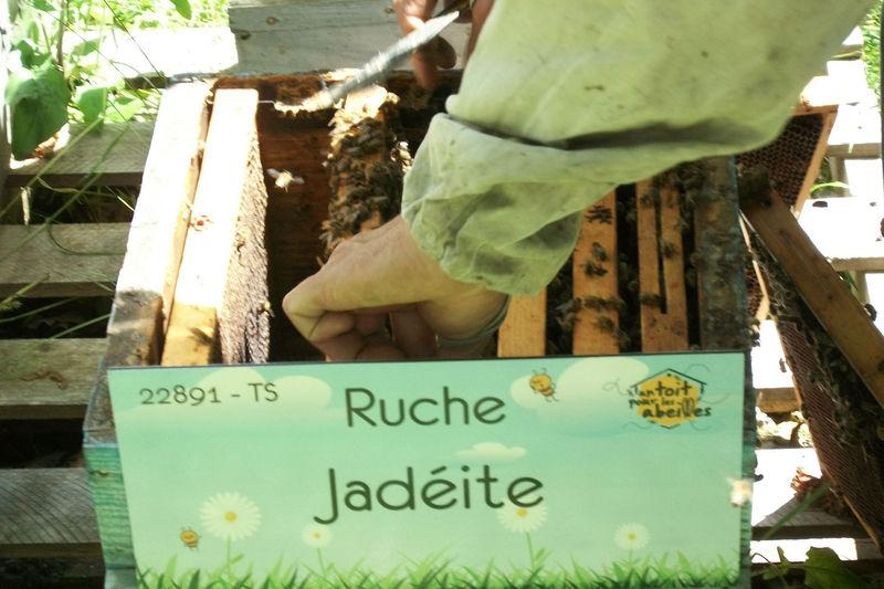 La ruche Jadéite