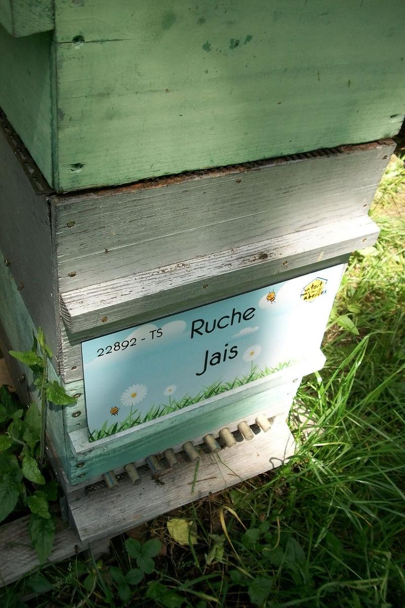La ruche Jais