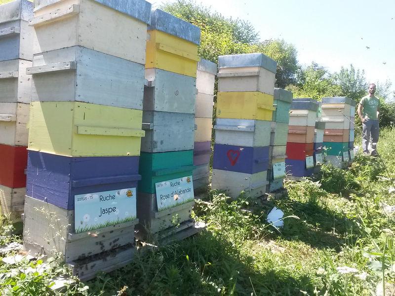 La ruche Jaspe