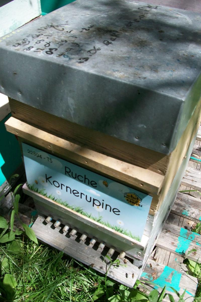 La ruche Kornerupine