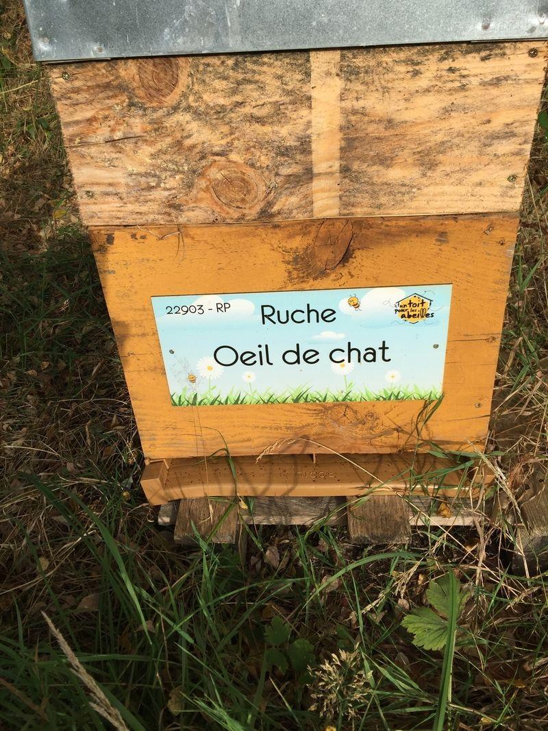 La ruche Oeil de chat