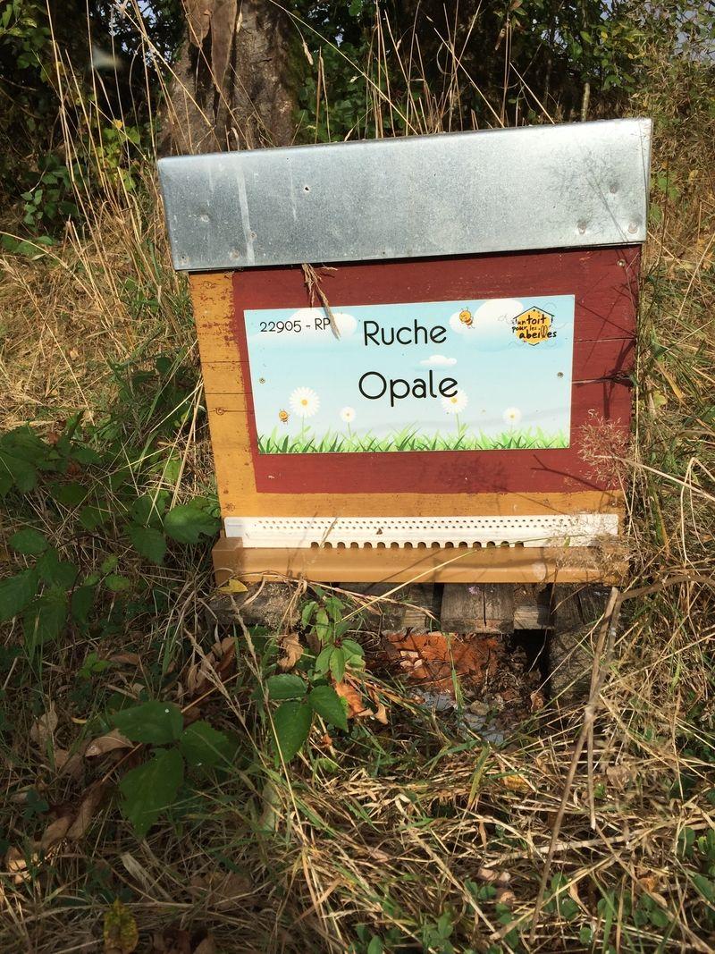 La ruche Opale