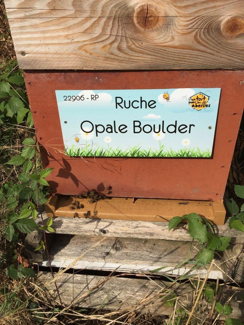 La ruche Opale Boulder