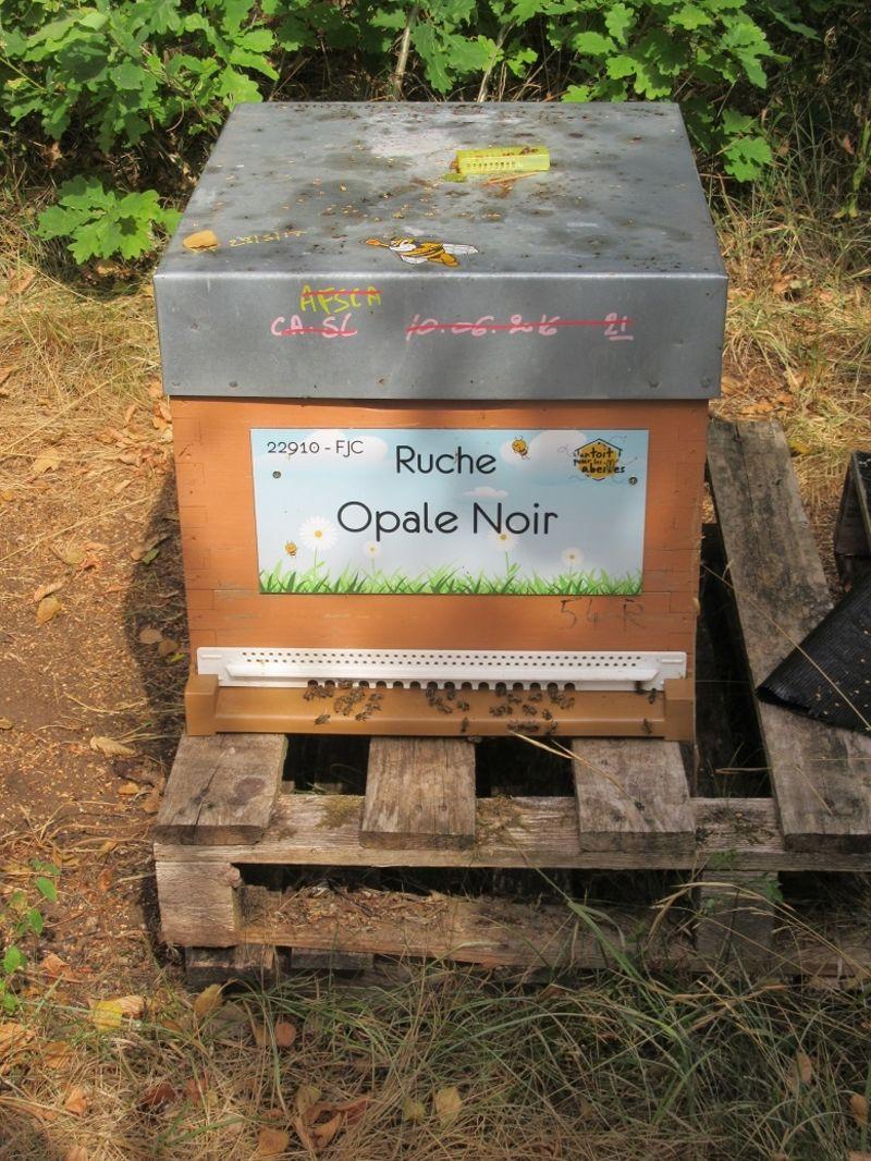 La ruche Opale Noir